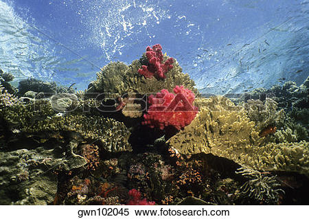 Stock Image of Coral reef with soft and hard corals underwater.