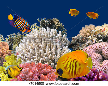 Stock Photography of Underwater life of a hard.