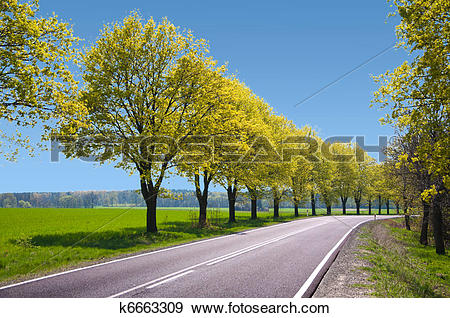 Stock Photograph of empty route with trees on the hard shoulder.