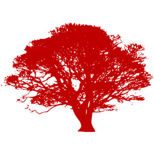 GoT: Weirwood & Heart Tree.