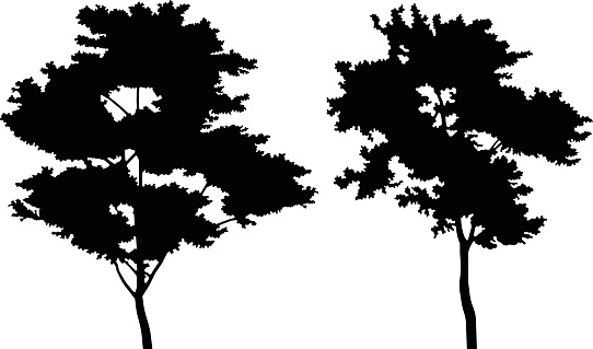 Hardwood Trees Clip Art Clip Art, Vector Images & Illustrations.