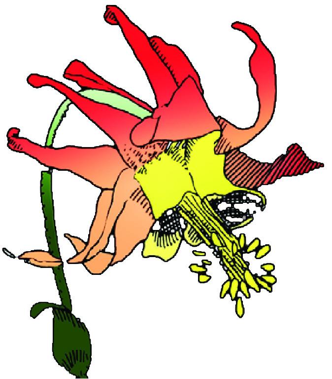 Hardy Plant Societies.
