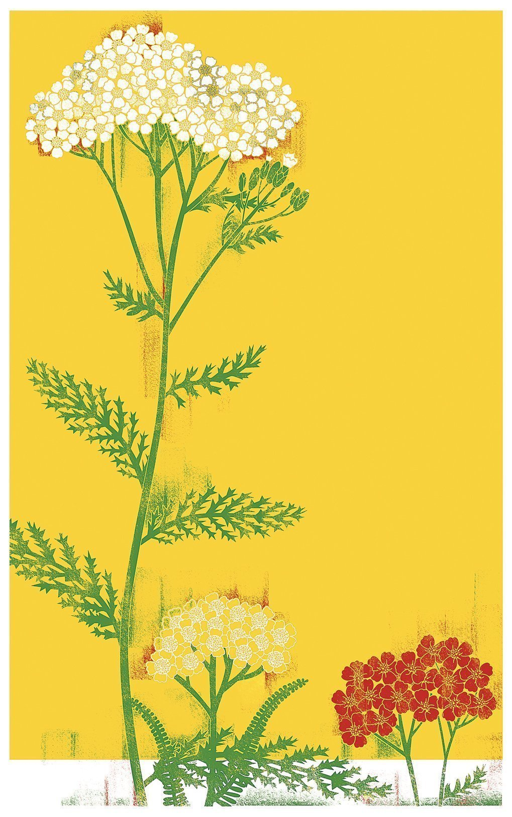 Hardy yarrow can color your world.