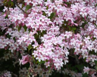 Flowering bushes.