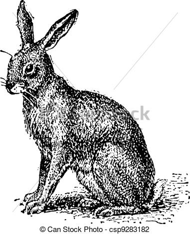 Hares Vector Clip Art Illustrations. 9,896 Hares clipart EPS.