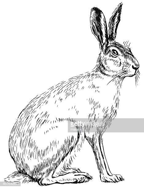30 Top Hare Stock Illustrations, Clip art, Cartoons and Icons.
