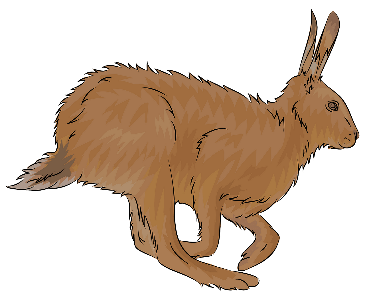 Brown hare clipart. Free download..