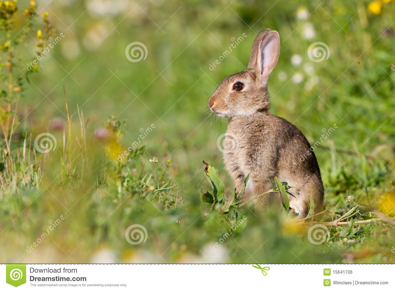 Rabbit In Meadow Royalty Free Stock Image.