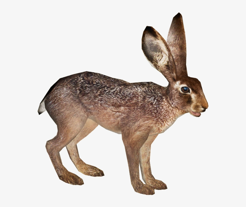 brown hare PNG Images.