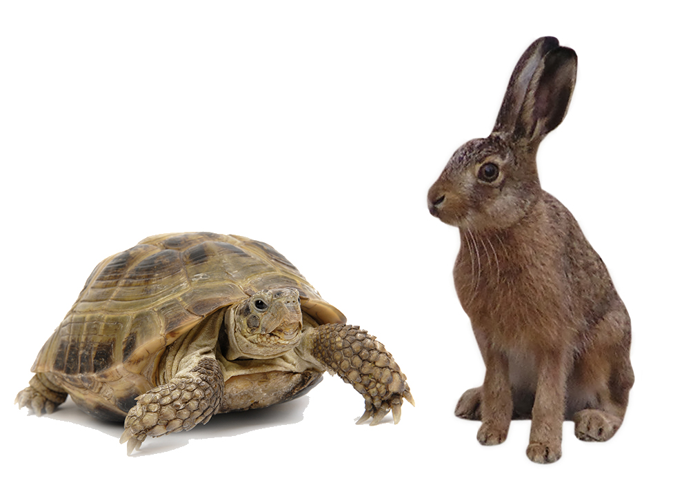 PNG Hare And Tortoise Transparent Hare And Tortoise.PNG Images.