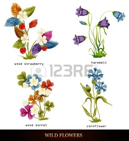 259 Harebell Stock Vector Illustration And Royalty Free Harebell.
