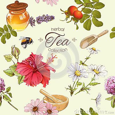 Tea Rose Hips Stock Illustrations.