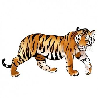 Harimau clipart 1 » Clipart Portal.