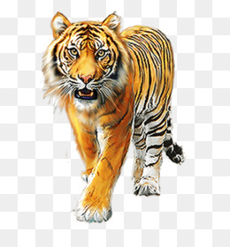 Harimau, Singa, Detroit Lions gambar png.