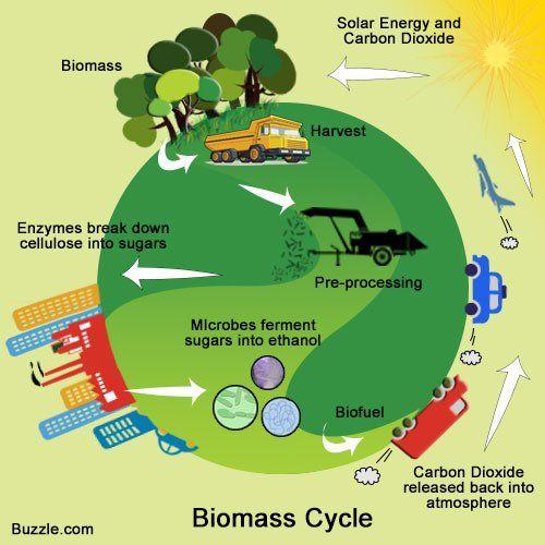 1000+ ideas about Biomass Energy on Pinterest.