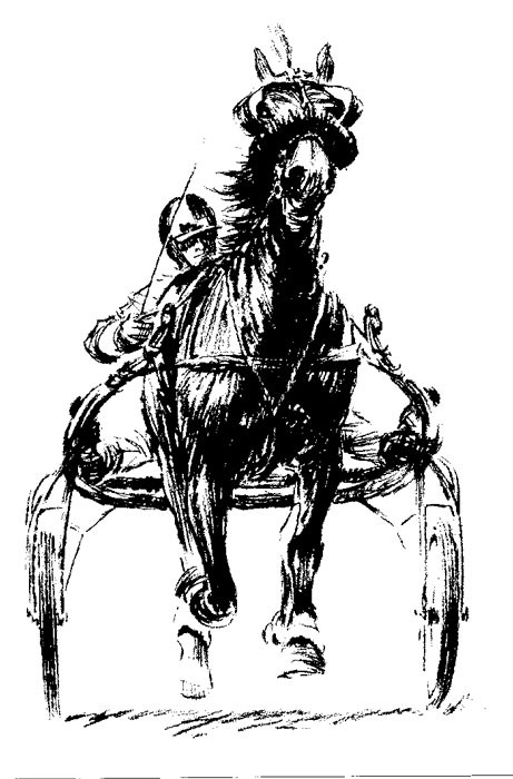 Harness Racing Clip Art Free.