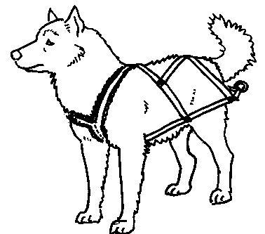 DIY various types of dog #harness for walking, pulling, sledding.