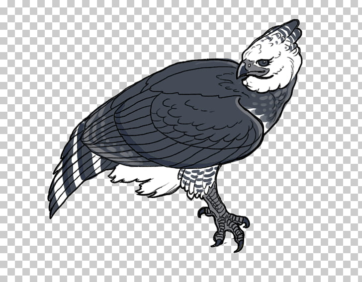 Vulture Harpy Eagle, eagle PNG clipart.