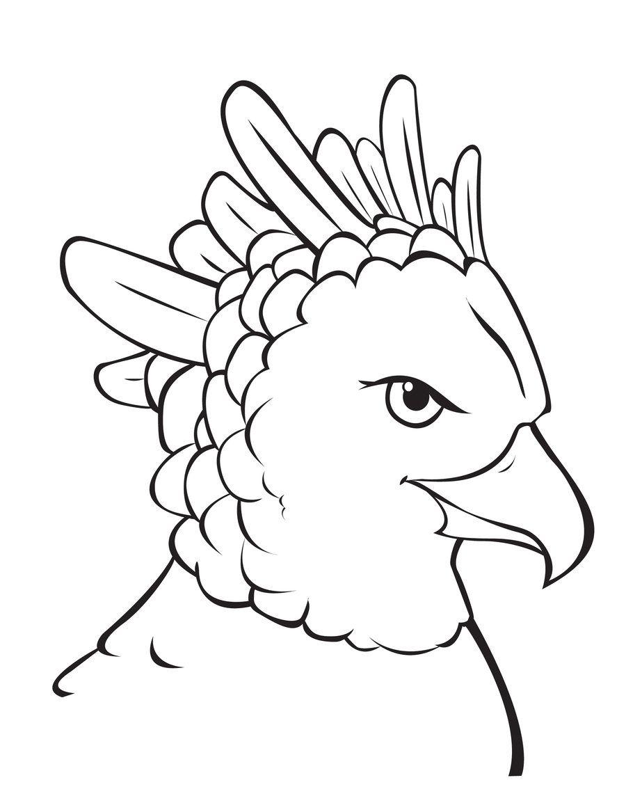 Harpy Eagle coloring sheet.