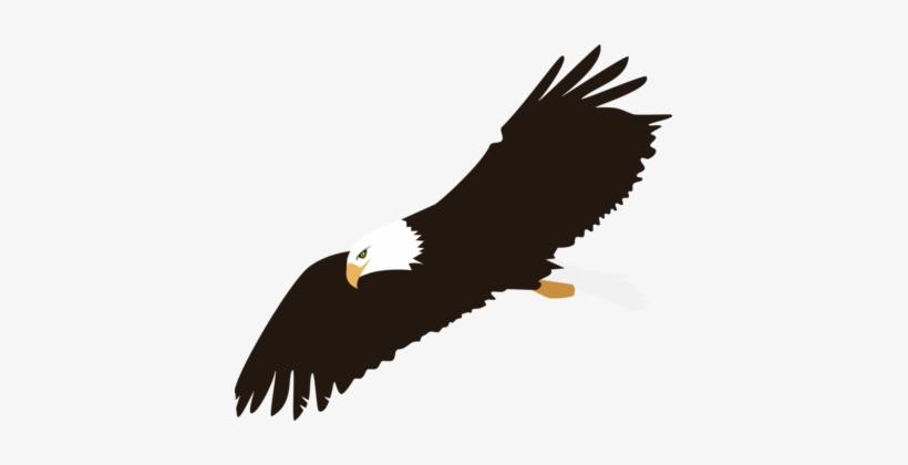 Bald Eagle Harpy Eagle Download.