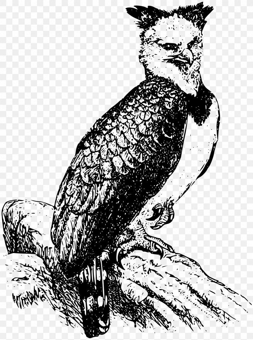 Bald Eagle Harpy Eagle Clip Art, PNG, 1784x2400px, Bald.
