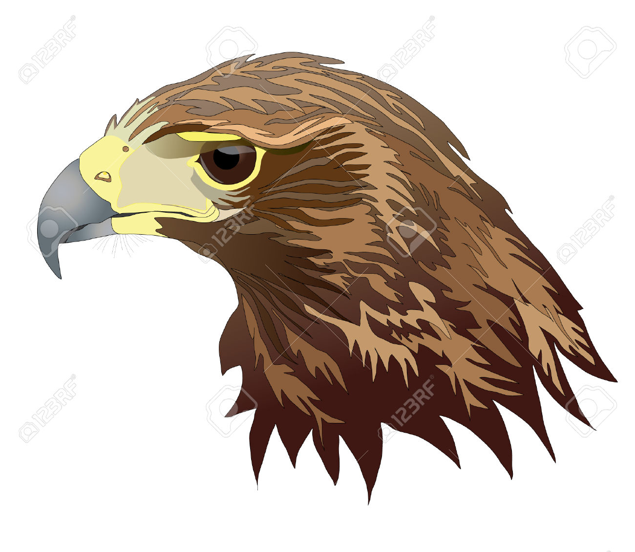 Harris ' hawk clipart - Clipground