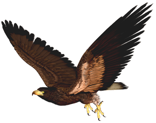 Best Hawk Clipart #17421.