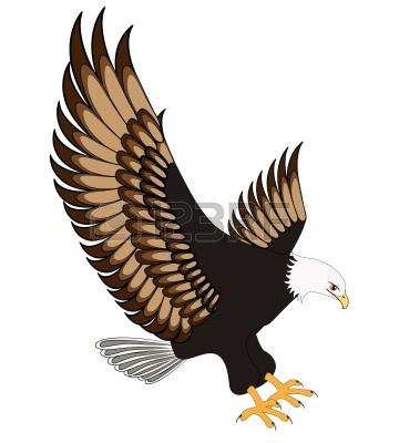 Clip art hawk.