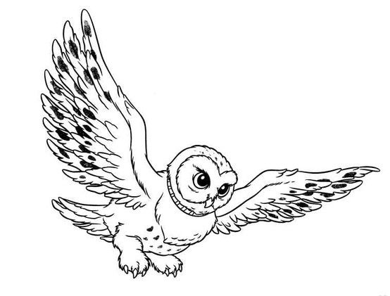 flying owl.