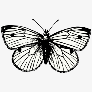 Harry Styles Butterfly Tattoo Png.