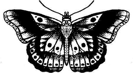 harrys butterfly tattoo.