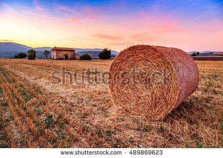 Field Golden Harvest Over Sunset Stock Photos, Royalty.
