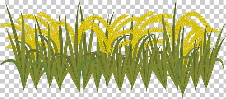 Sweet Grass Yellow Wheatgrass Commodity Plant stem, harvest.