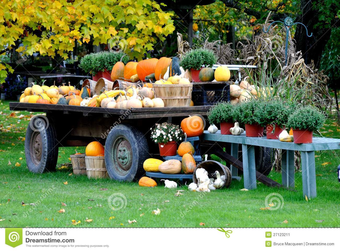 Fall Harvest Wagon Stock Photos, Images, & Pictures.