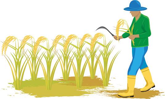 Clipart rice farmer.