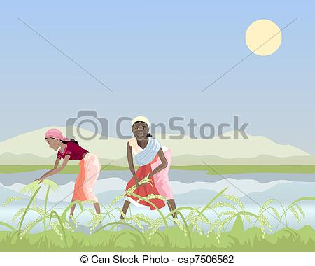 Vector Illustration of harvesting rice.