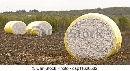 Stock Photos of Cotton Harvest.