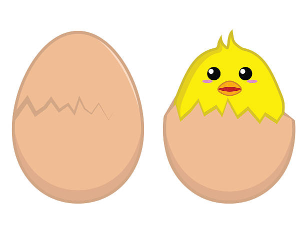Best Egg Hatch Illustrations, Royalty.