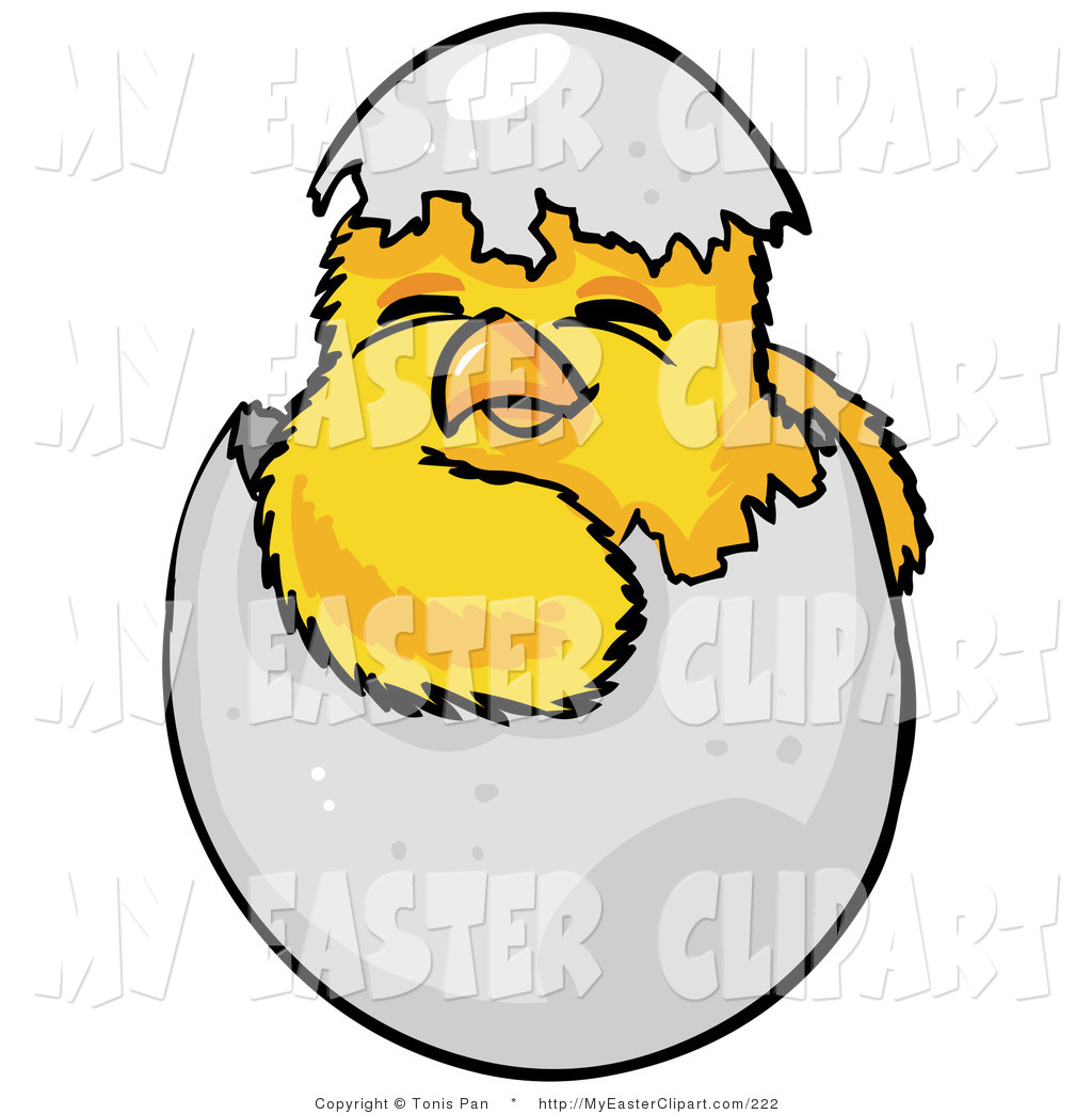 Clip Art of a Cute Baby Yellow Chick Hatchling, Hatching out of a.