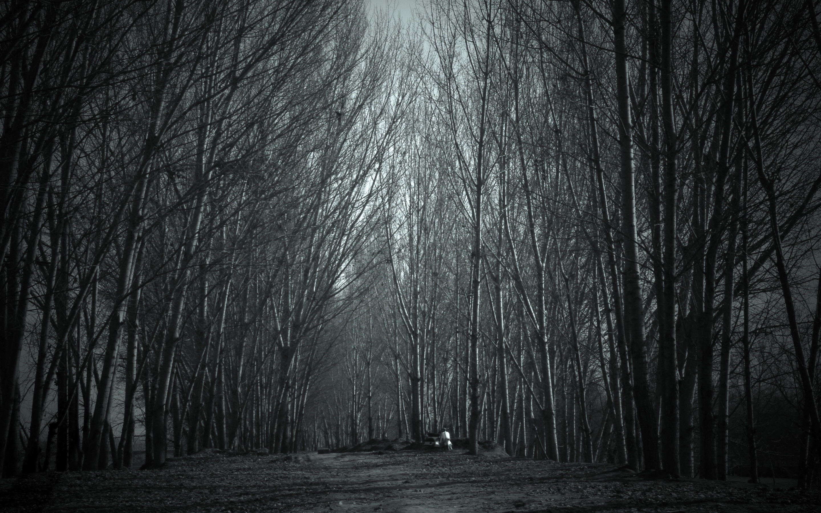 Haunted Forest Wallpaper (59+ images).