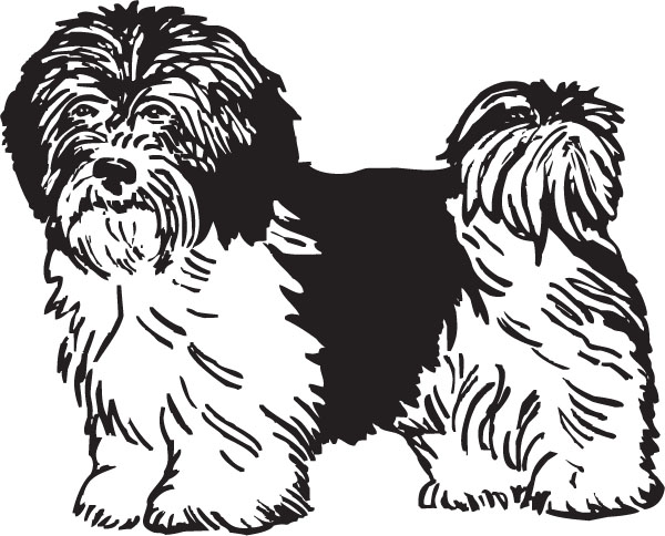 Free Havanese Puppy Cliparts, Download Free Clip Art, Free.