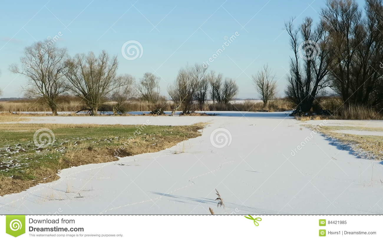 Havel River Chanal With Footprints Of Nutria River Rat In Snow.