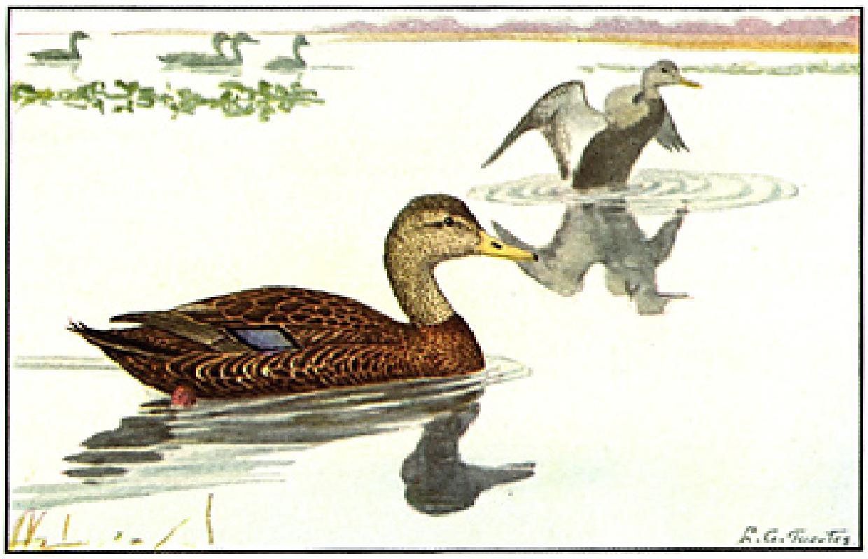 Flood Waters Wreak Havoc on Southern Illinois Duck Hunting.