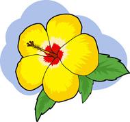 Hawaiian State Flower Clipart.