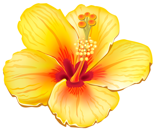 PNG Hawaiian Flower Transparent Hawaiian Flower.PNG Images.