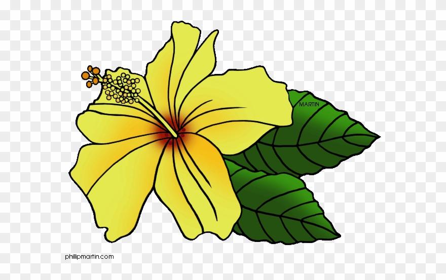 Download Hawaii State Flower Clip Art Clipart Hawaiian.