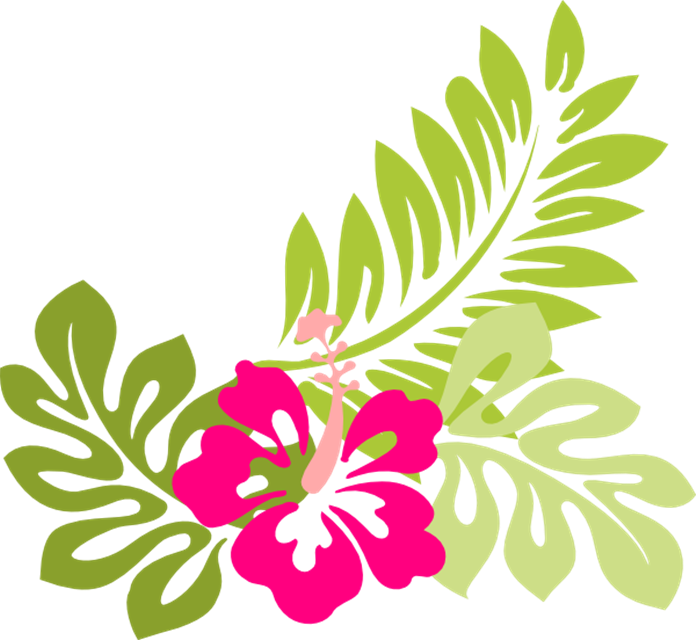 Hawaiian Flowers Border Clipart 20 Free Cliparts Download Images