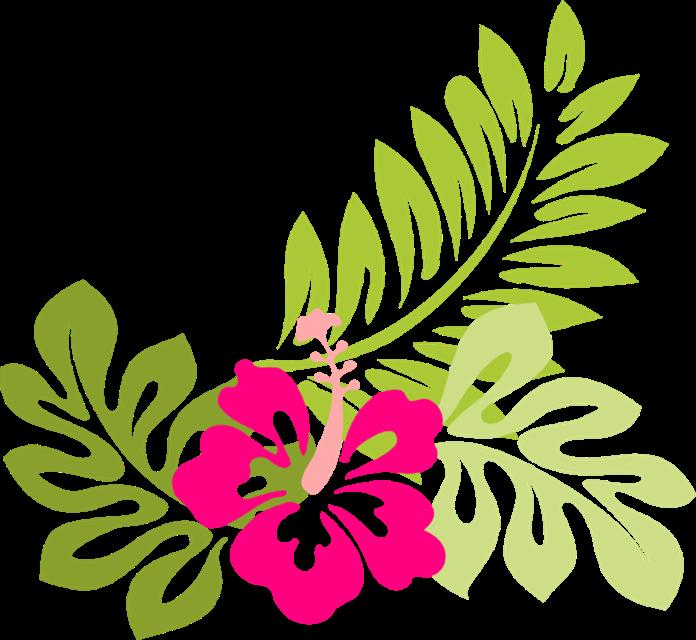 Tropical Flower Clip Art Flowers Clip Art Hawaiian Flower Clip Art.