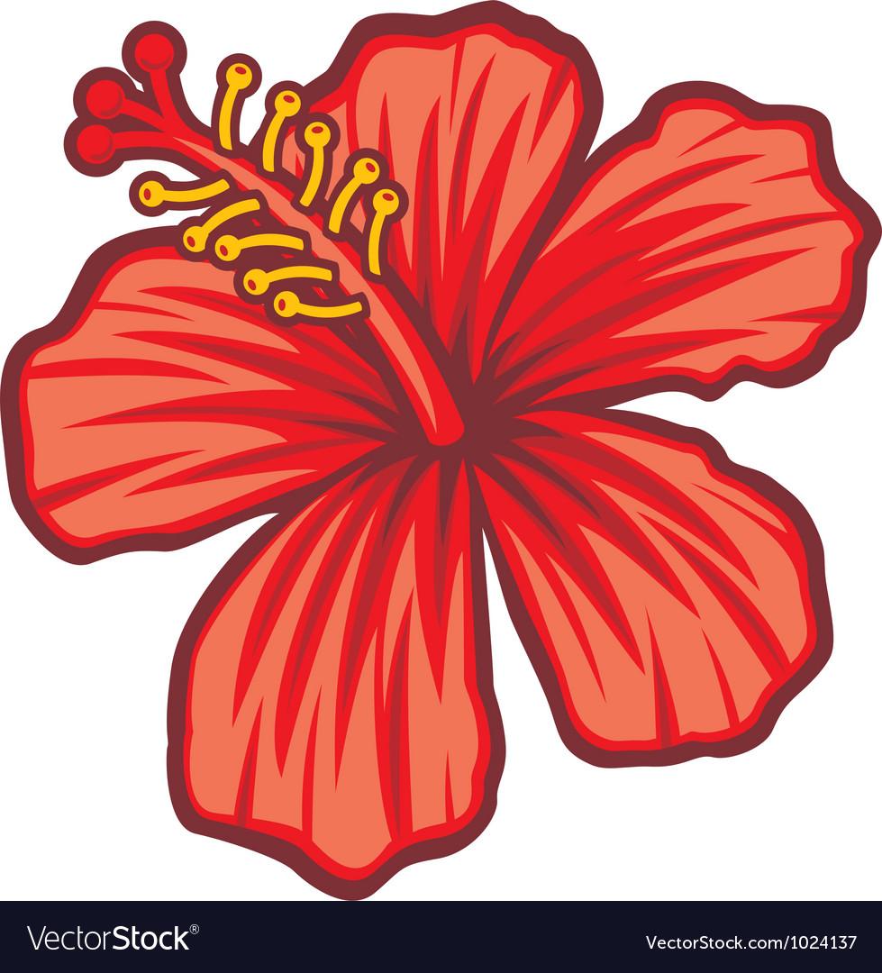 Beautiful red hibiscus flower.
