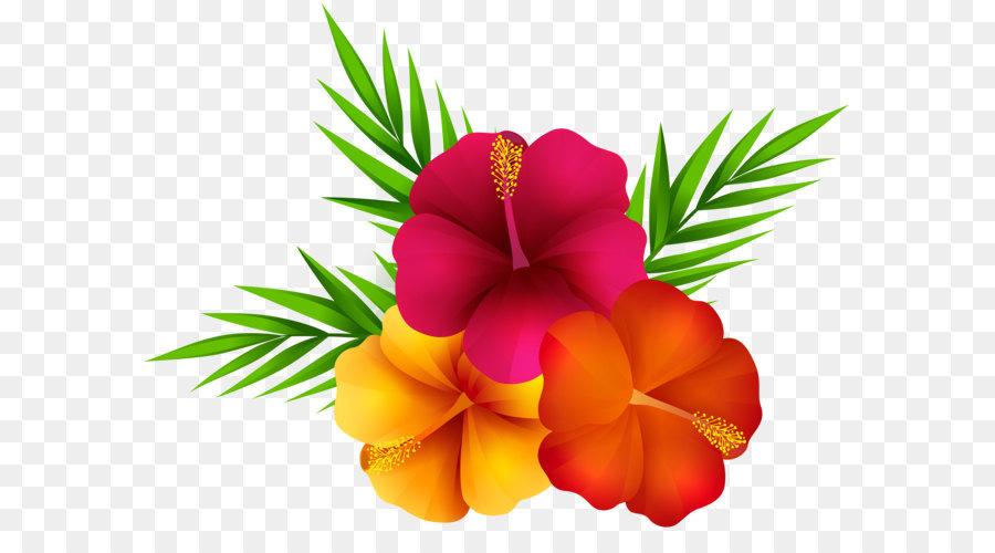 Hawaiian Flower png download.